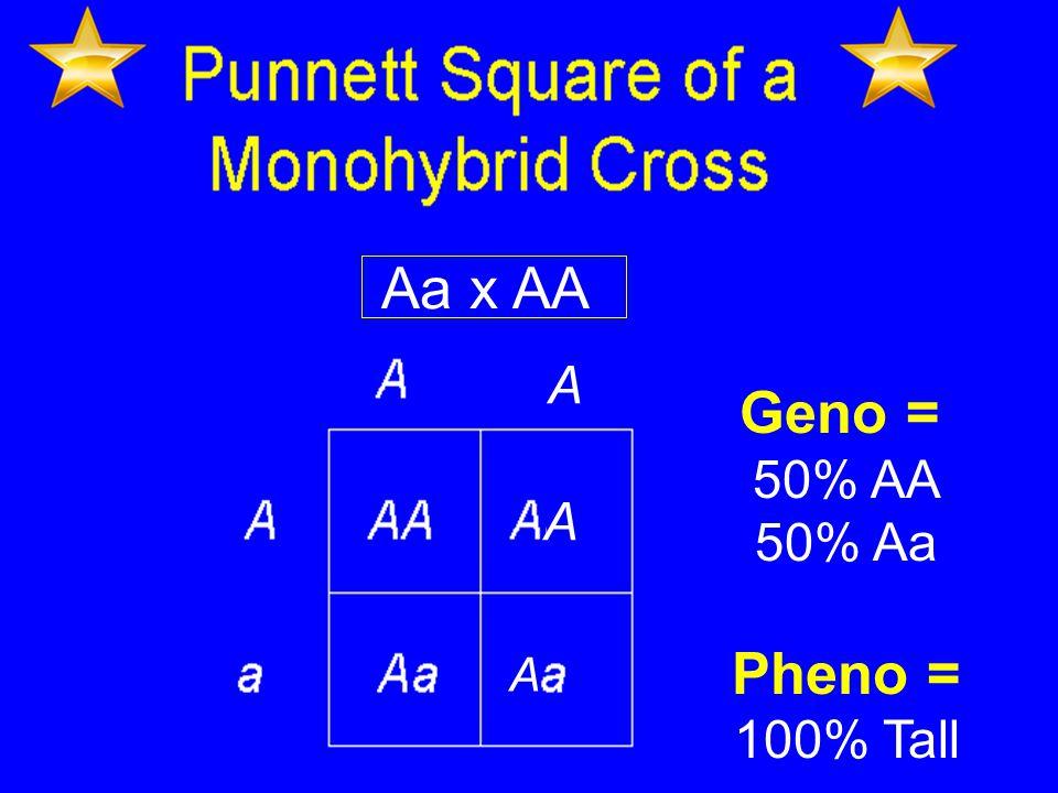 Aa x AA Geno = 50% AA 50% Aa Pheno = 100% Tall A A A