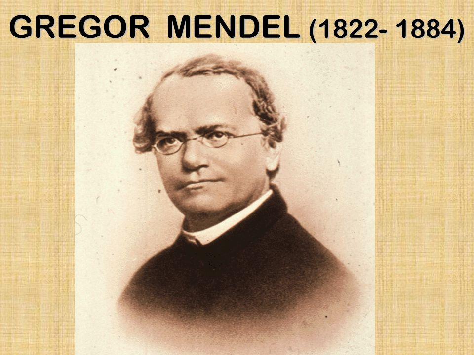 GREGOR MENDEL (1822- 1884)