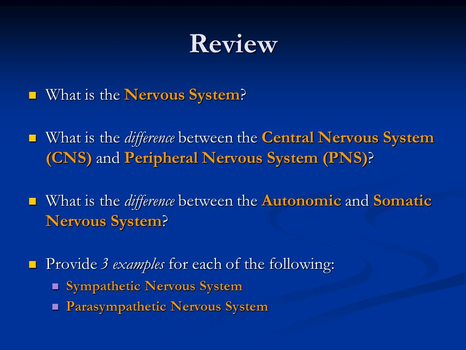 Review What is the Nervous System. What is the Nervous System.