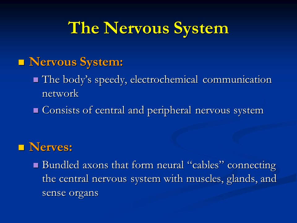 The Nervous System Nervous System: Nervous System: The body's speedy, electrochemical communication network The body's speedy, electrochemical communication network Consists of central and peripheral nervous system Consists of central and peripheral nervous system Nerves: Nerves: Bundled axons that form neural cables connecting the central nervous system with muscles, glands, and sense organs Bundled axons that form neural cables connecting the central nervous system with muscles, glands, and sense organs
