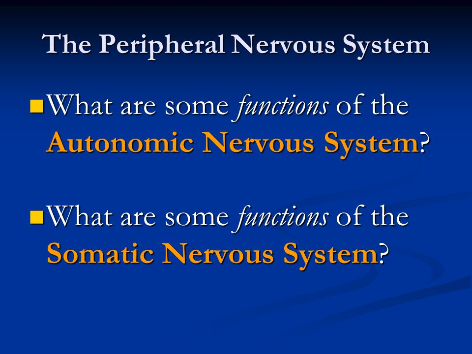 The Peripheral Nervous System What are some functions of the Autonomic Nervous System? What are some functions of the Autonomic Nervous System? What a
