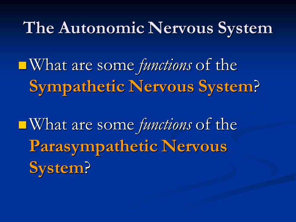 The Autonomic Nervous System What are some functions of the Sympathetic Nervous System? What are some functions of the Sympathetic Nervous System? Wha