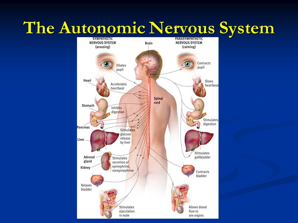 Provide an example of a situation that might cause activity within the Sympathetic Nervous System.