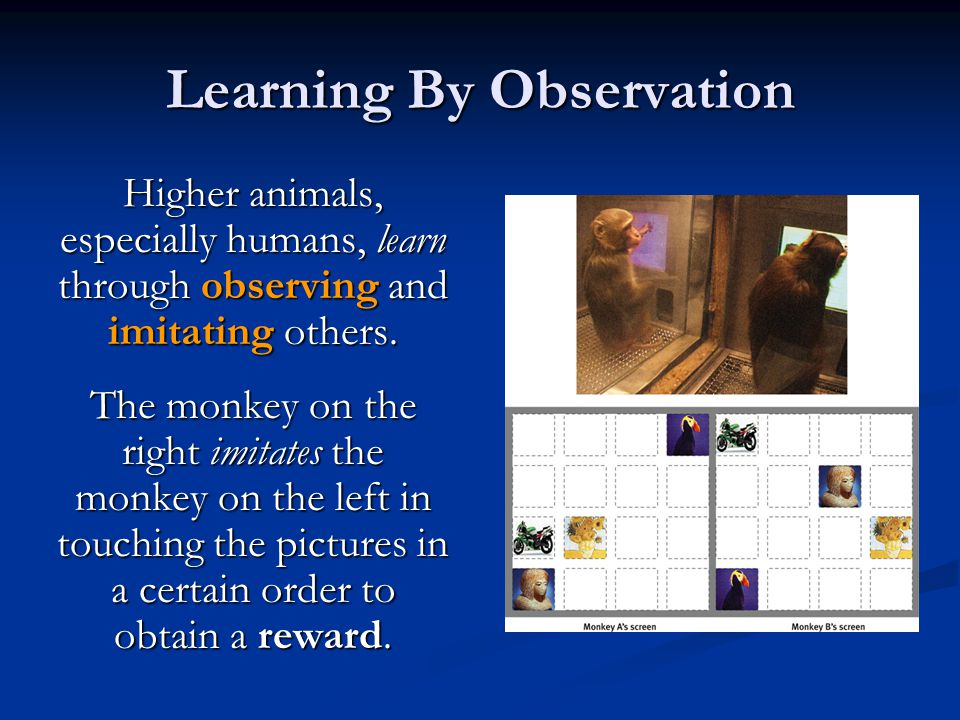 Learning By Observation Higher animals, especially humans, learn through observing and imitating others. The monkey on the right imitates the monkey o