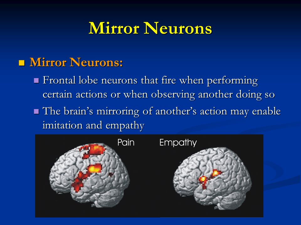Mirror Neurons Mirror Neurons: Mirror Neurons: Frontal lobe neurons that fire when performing certain actions or when observing another doing so Front