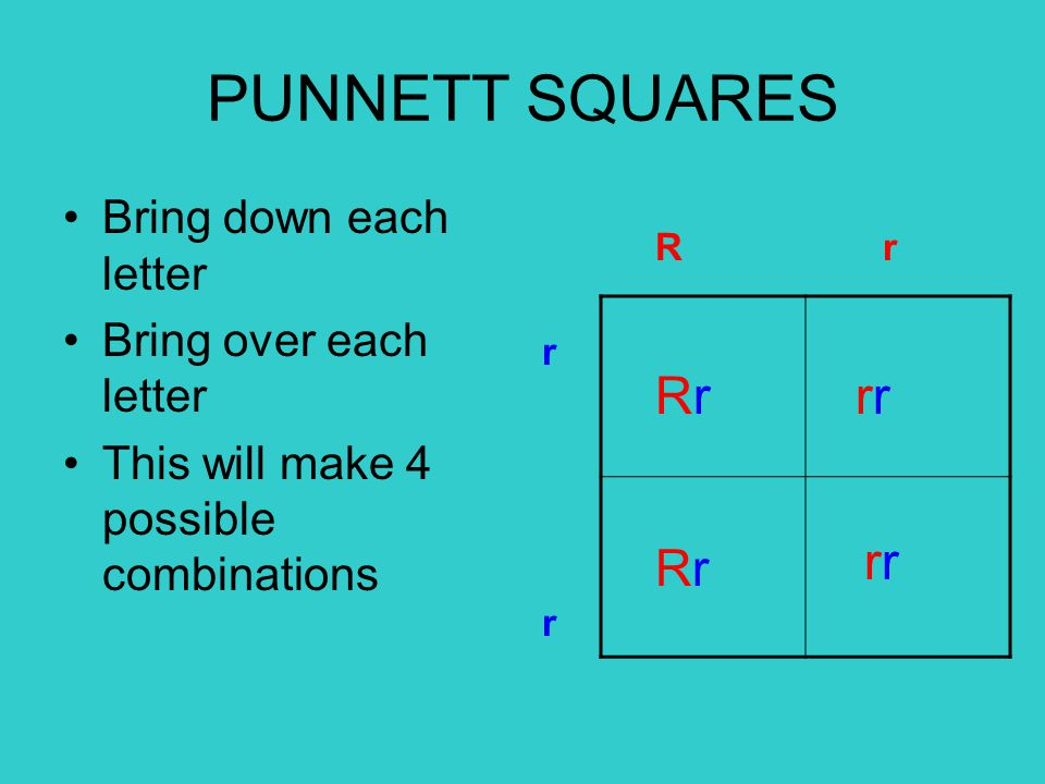Bring down each letter Bring over each letter This will make 4 possible combinations R r rrrr RrRr RrRr r r PUNNETT SQUARES