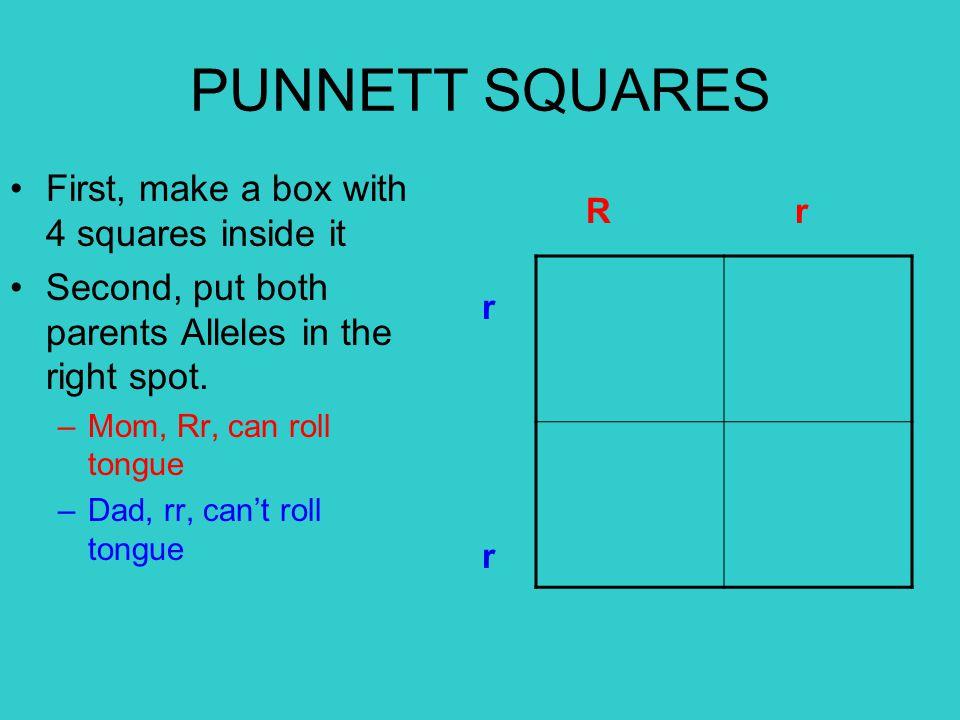 Bring down each letter Bring over each letter This will make 4 possible combinations R r rrrr RrRr RrRr r r PUNNETT SQUARES