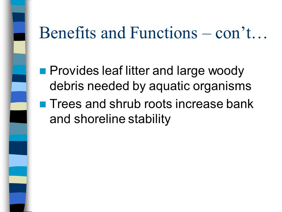 Benefits and Functions – con't… Provides leaf litter and large woody debris needed by aquatic organisms Trees and shrub roots increase bank and shoreline stability