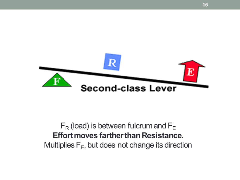 F R (load) is between fulcrum and F E Effort moves farther than Resistance. Multiplies F E, but does not change its direction 16