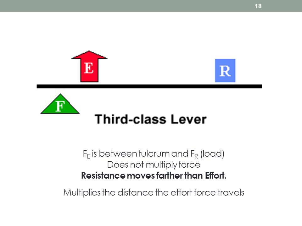 F E is between fulcrum and F R (load) Does not multiply force Resistance moves farther than Effort. Multiplies the distance the effort force travels 1