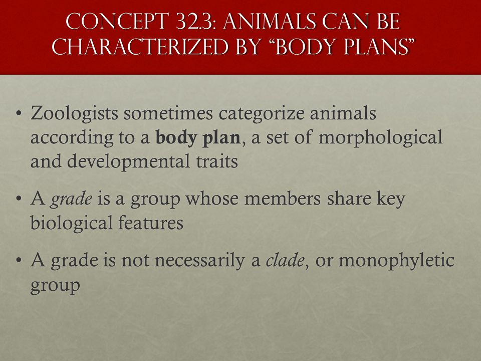 """Concept 32.3: Animals can be characterized by """"body plans"""" Zoologists sometimes categorize animals according to a body plan, a set of morphological an"""
