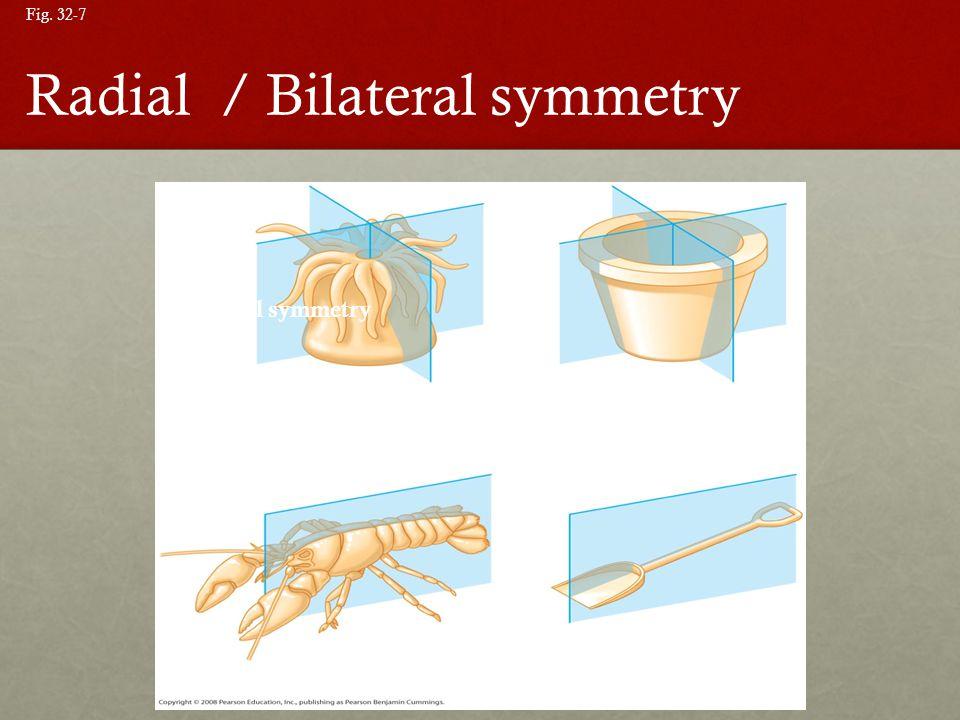 Fig. 32-7 (a) Radial symmetry (b) Bilateral symmetry Radial / Bilateral symmetry