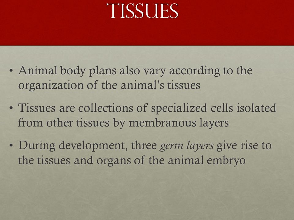 Tissues Animal body plans also vary according to the organization of the animal's tissuesAnimal body plans also vary according to the organization of