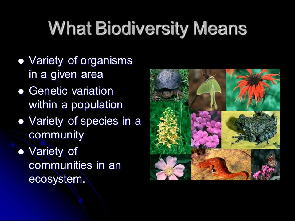 What Biodiversity Means Variety of organisms in a given area Variety of organisms in a given area Genetic variation within a population Genetic variat