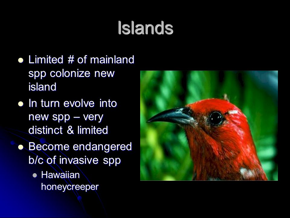 Islands Limited # of mainland spp colonize new island Limited # of mainland spp colonize new island In turn evolve into new spp – very distinct & limi