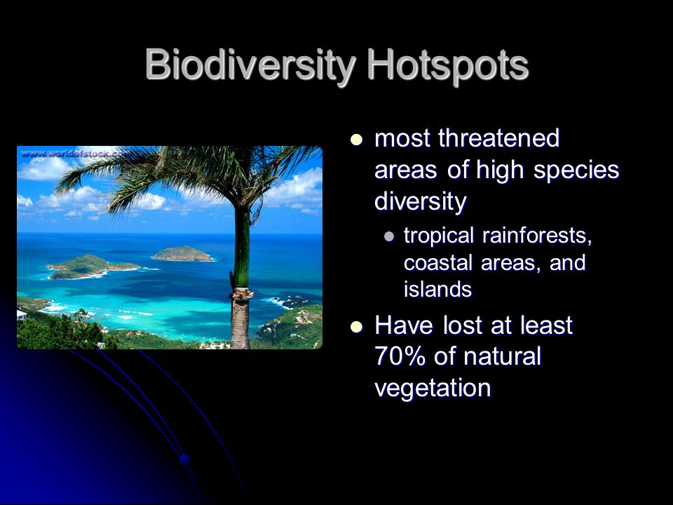 Biodiversity Hotspots most threatened areas of high species diversity most threatened areas of high species diversity tropical rainforests, coastal ar