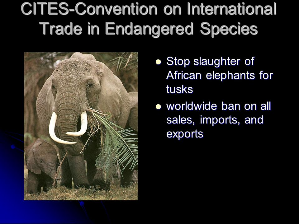 CITES-Convention on International Trade in Endangered Species Stop slaughter of African elephants for tusks Stop slaughter of African elephants for tu