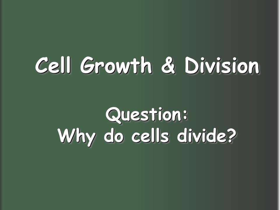 Cell Growth & Division Question: Why do cells divide? Cell Growth & Division Question: Why do cells divide?