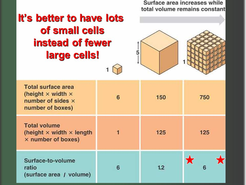 It's better to have lots of small cells instead of fewer instead of fewer large cells!