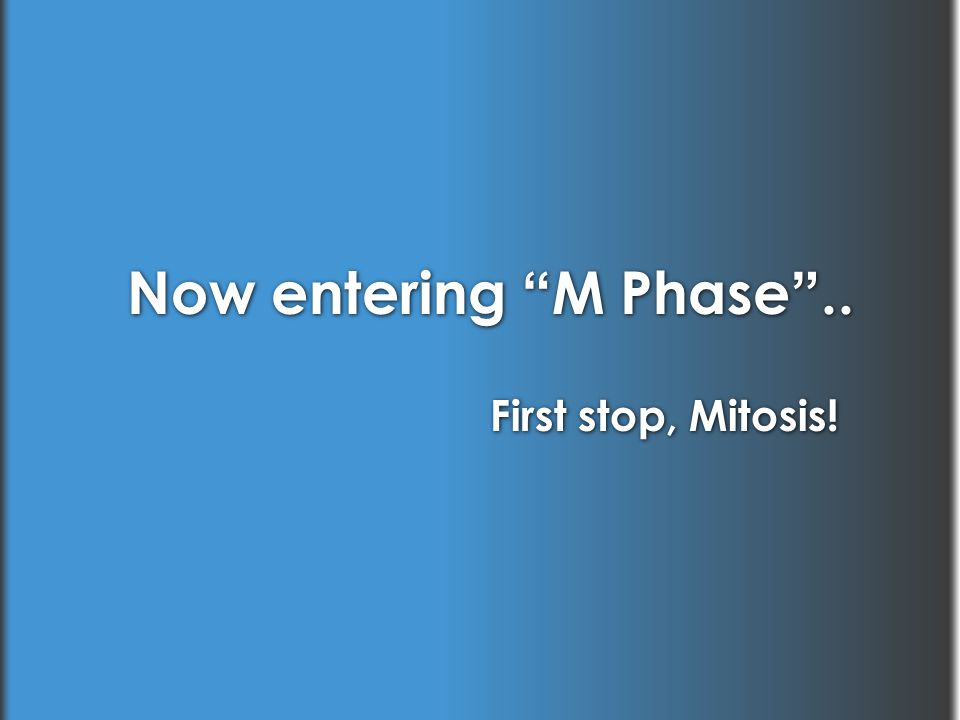 """Now entering """"M Phase"""".. First stop, Mitosis!"""