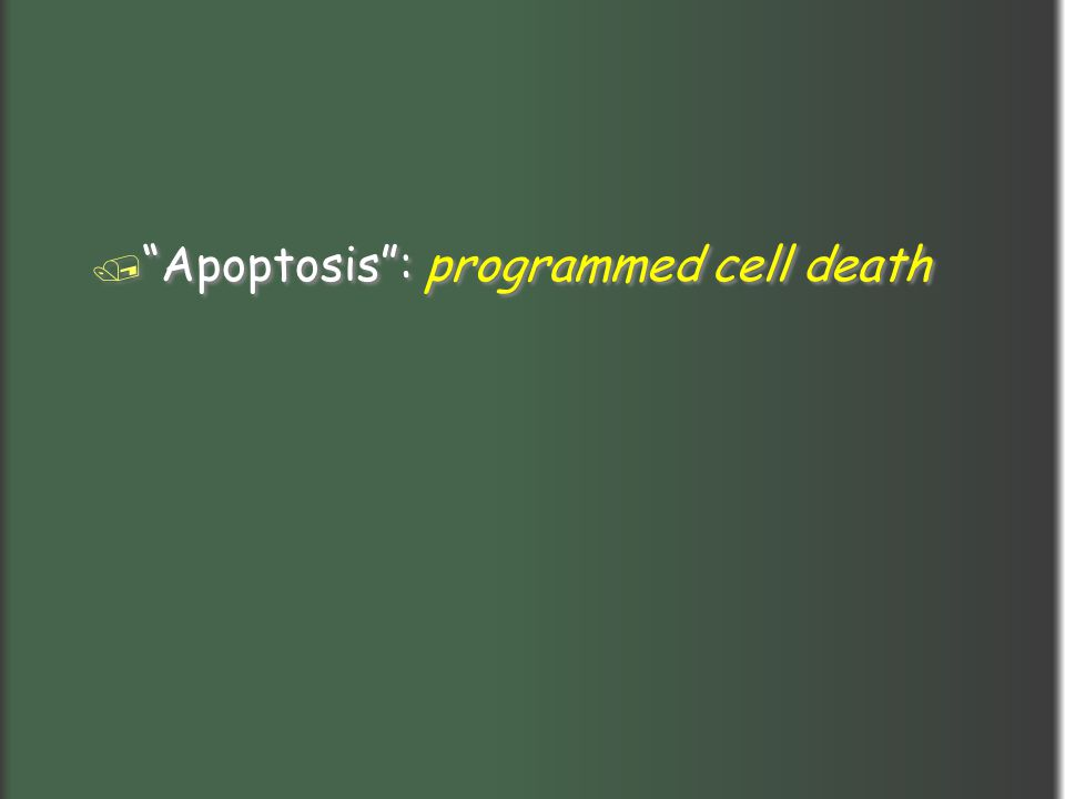 """/ """"Apoptosis"""": programmed cell death"""