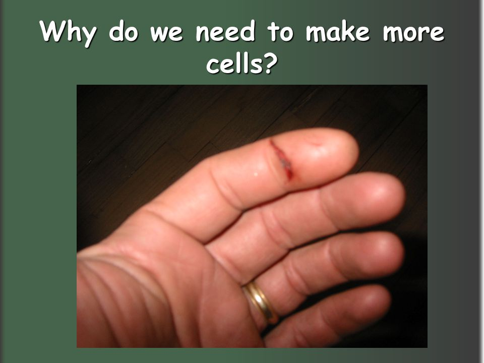 Why do we need to make more cells?