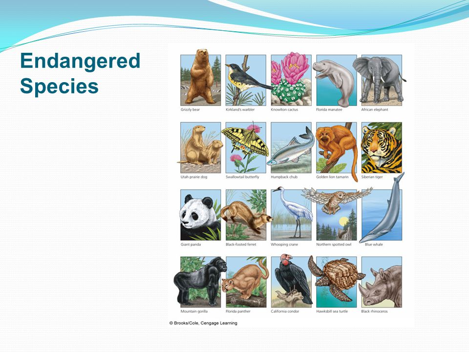 Percentage of Various Species Threatened with Premature Extinction