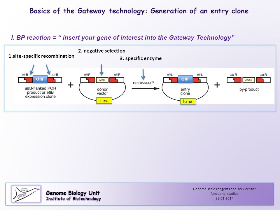 "I. BP reaction = "" insert your gene of interest into the Gateway Technology"" 2. negative selection 3. specific enzyme ORF 1.site-specific recombinatio"