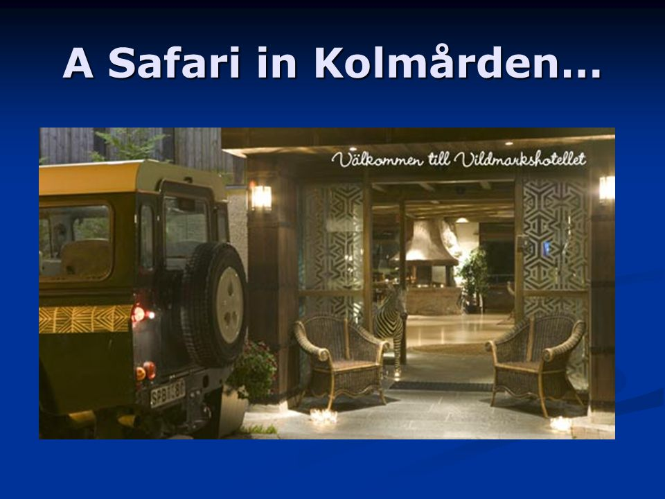 A Safari in Kolmården…