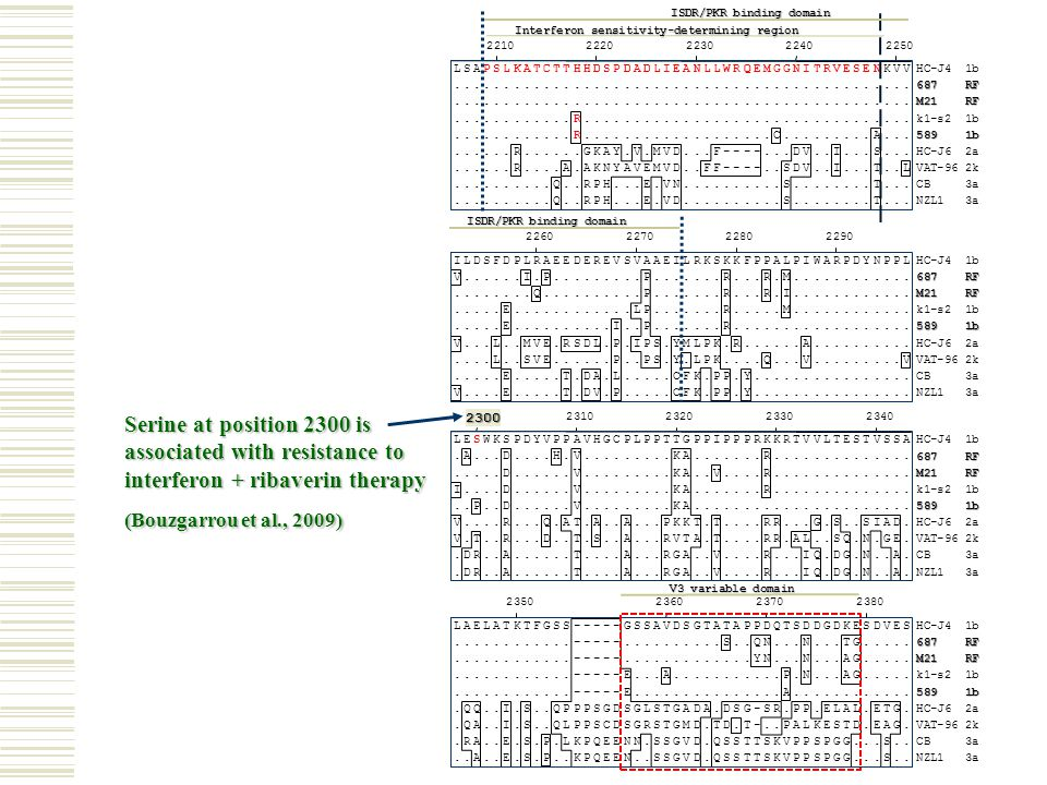 Serine at position 2300 is associated with resistance to interferon + ribaverin therapy (Bouzgarrou et al., 2009) 2260227022802290 ILDSFDPLRAEEDEREVSV