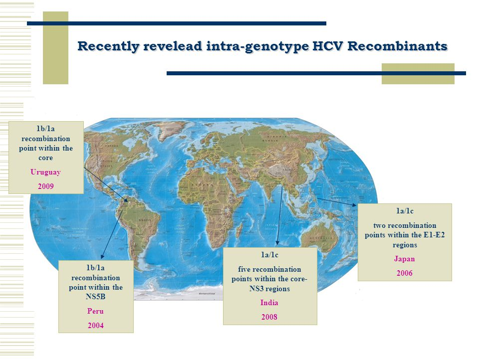 CONCLUSIONS I  Currently, more than 40 recombinant RF1_2k/1b strains circulating in the human population are known; most of them from the former Soviet Union Countries where recombinant has likely emerged  At present, six natural inter-genotyping and four intra-genotyping recombinant HCV forms were identified in the world Recombination plays a significant role in the HCV evolution by creating genetic variants with new properties that has to be studied  Recombination plays a significant role in the HCV evolution by creating genetic variants with new properties that has to be studied