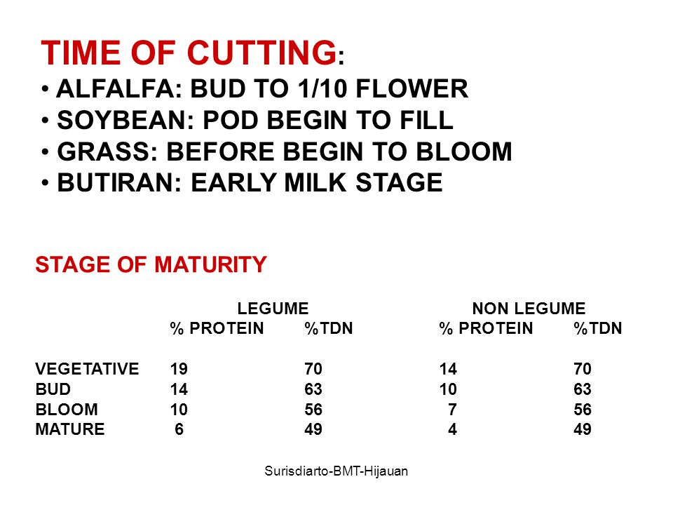 Surisdiarto-BMT-Hijauan TIME OF CUTTING : ALFALFA: BUD TO 1/10 FLOWER SOYBEAN: POD BEGIN TO FILL GRASS: BEFORE BEGIN TO BLOOM BUTIRAN: EARLY MILK STAGE STAGE OF MATURITY LEGUME NON LEGUME % PROTEIN%TDN% PROTEIN%TDN VEGETATIVE BUD BLOOM MATURE