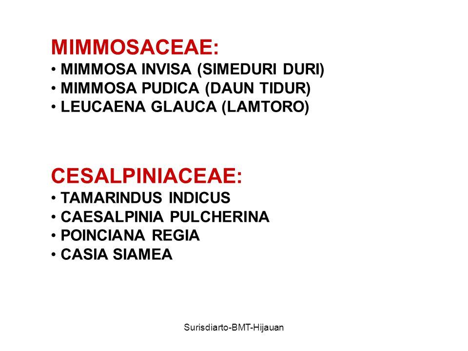 Surisdiarto-BMT-Hijauan MIMMOSACEAE: MIMMOSA INVISA (SIMEDURI DURI) MIMMOSA PUDICA (DAUN TIDUR) LEUCAENA GLAUCA (LAMTORO) CESALPINIACEAE: TAMARINDUS INDICUS CAESALPINIA PULCHERINA POINCIANA REGIA CASIA SIAMEA