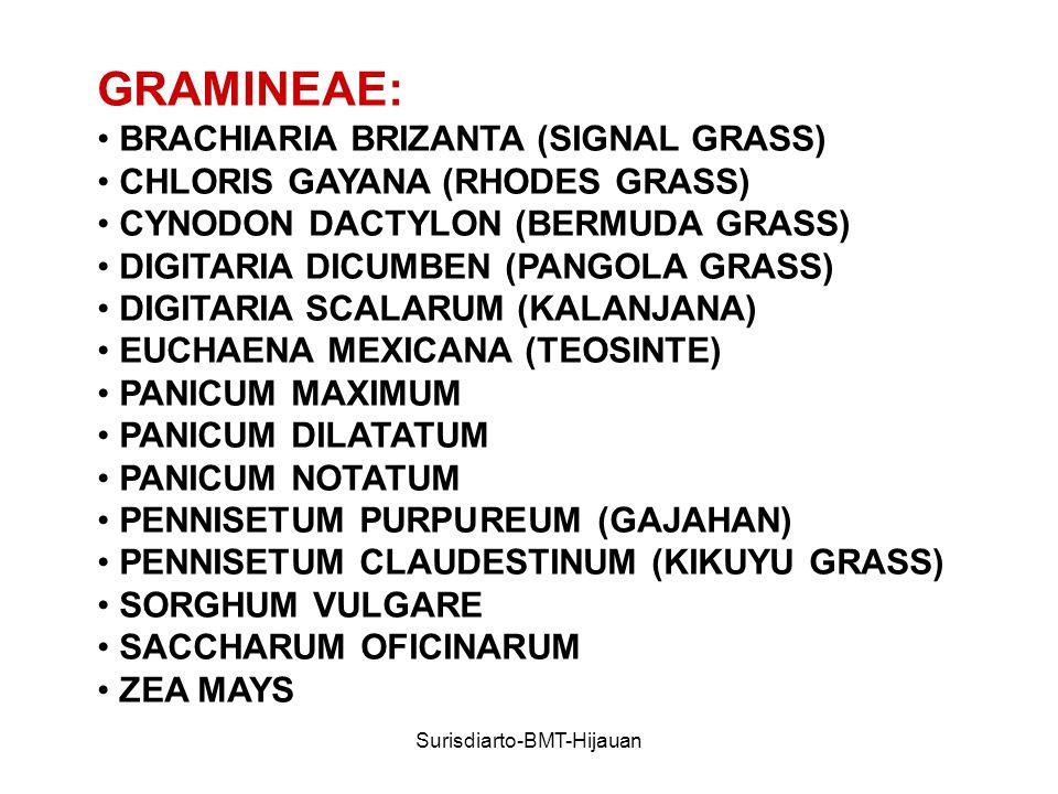 Surisdiarto-BMT-Hijauan GRAMINEAE: BRACHIARIA BRIZANTA (SIGNAL GRASS) CHLORIS GAYANA (RHODES GRASS) CYNODON DACTYLON (BERMUDA GRASS) DIGITARIA DICUMBEN (PANGOLA GRASS) DIGITARIA SCALARUM (KALANJANA) EUCHAENA MEXICANA (TEOSINTE) PANICUM MAXIMUM PANICUM DILATATUM PANICUM NOTATUM PENNISETUM PURPUREUM (GAJAHAN) PENNISETUM CLAUDESTINUM (KIKUYU GRASS) SORGHUM VULGARE SACCHARUM OFICINARUM ZEA MAYS