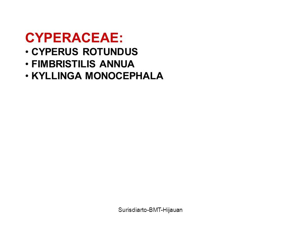 Surisdiarto-BMT-Hijauan CYPERACEAE: CYPERUS ROTUNDUS FIMBRISTILIS ANNUA KYLLINGA MONOCEPHALA