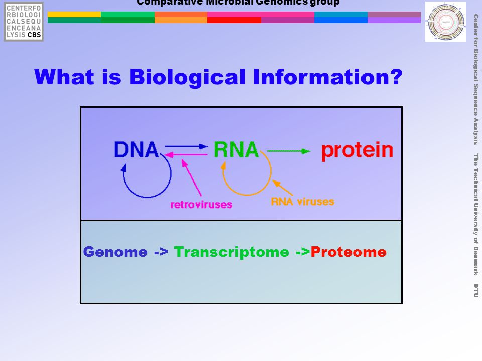 Center for Biological Sequence Analysis The Technical University of Denmark DTU Comparative Microbial Genomics group What is Biological Information.