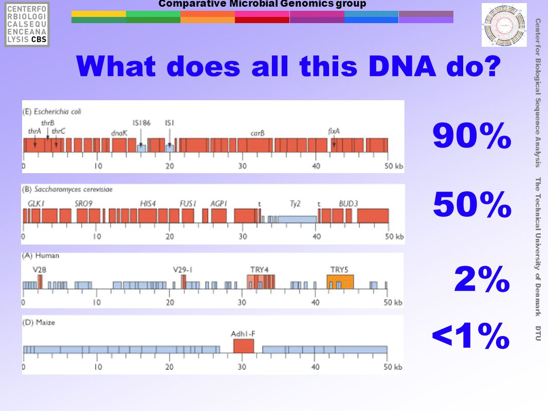 Comparative Microbial Genomics group Center for Biological Sequence Analysis The Technical University of Denmark DTU What does all this DNA do? 90% 50