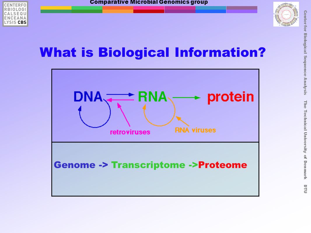 Comparative Microbial Genomics group Center for Biological Sequence Analysis The Technical University of Denmark DTU What is Biological Information? G
