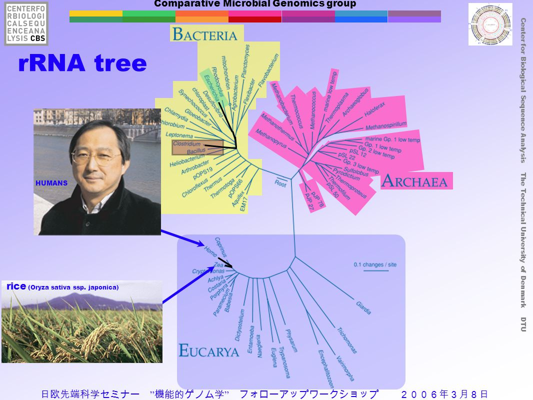 Comparative Microbial Genomics group Center for Biological Sequence Analysis The Technical University of Denmark DTU rRNA tree HUMANS rice (Oryza sati