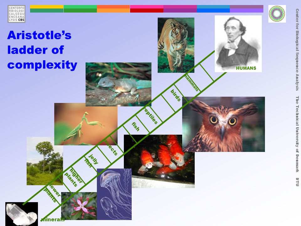 Center for Biological Sequence Analysis The Technical University of Denmark DTU insects fish reptiles higher plants lower plants minerals birds mammals jelly fish Aristotle's ladder of complexity HUMANS