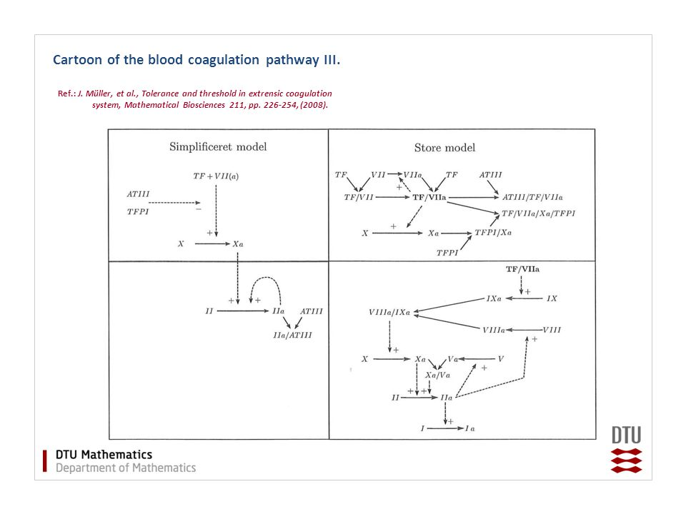 Cartoon of the blood coagulation pathway III.Ref.: J.
