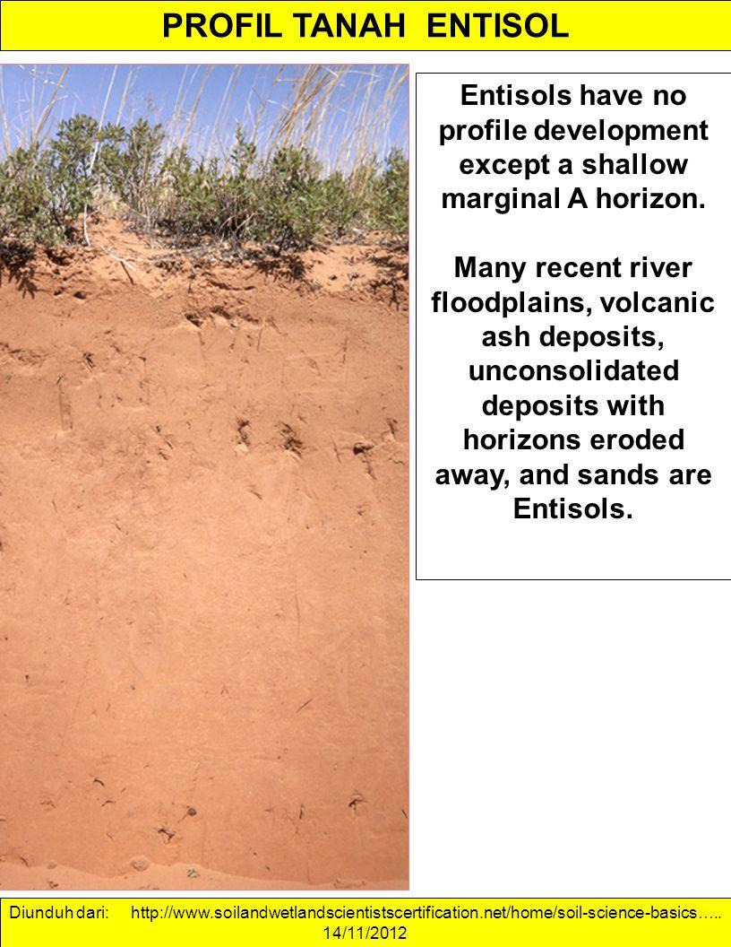 PROFIL TANAH ENTISOL Entisols have no profile development except a shallow marginal A horizon. Many recent river floodplains, volcanic ash deposits, u