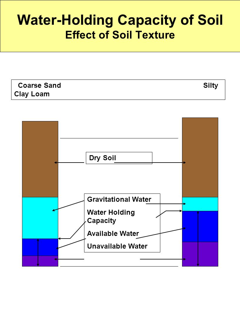 Water-Holding Capacity of Soil Effect of Soil Texture Coarse Sand Silty Clay Loam Gravitational Water Water Holding Capacity Available Water Unavailab