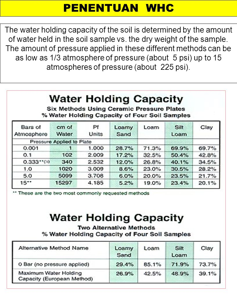 PENENTUAN WHC The water holding capacity of the soil is determined by the amount of water held in the soil sample vs. the dry weight of the sample. Th
