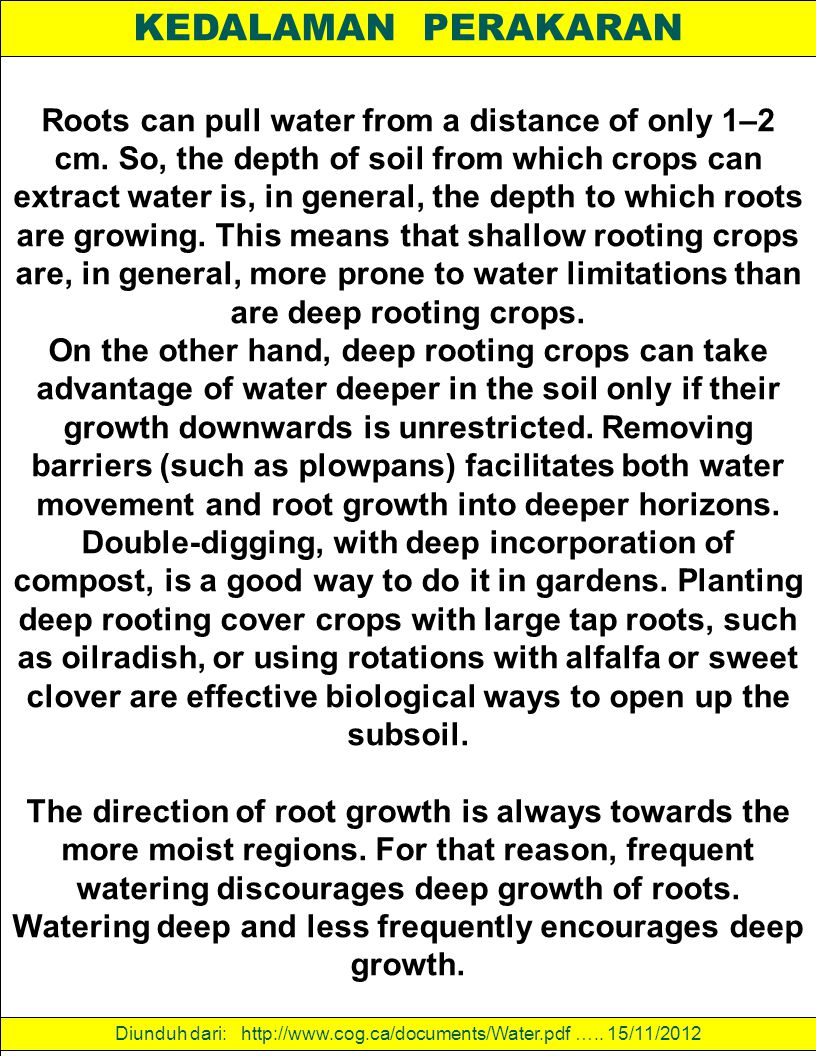 KEDALAMAN PERAKARAN Roots can pull water from a distance of only 1–2 cm. So, the depth of soil from which crops can extract water is, in general, the