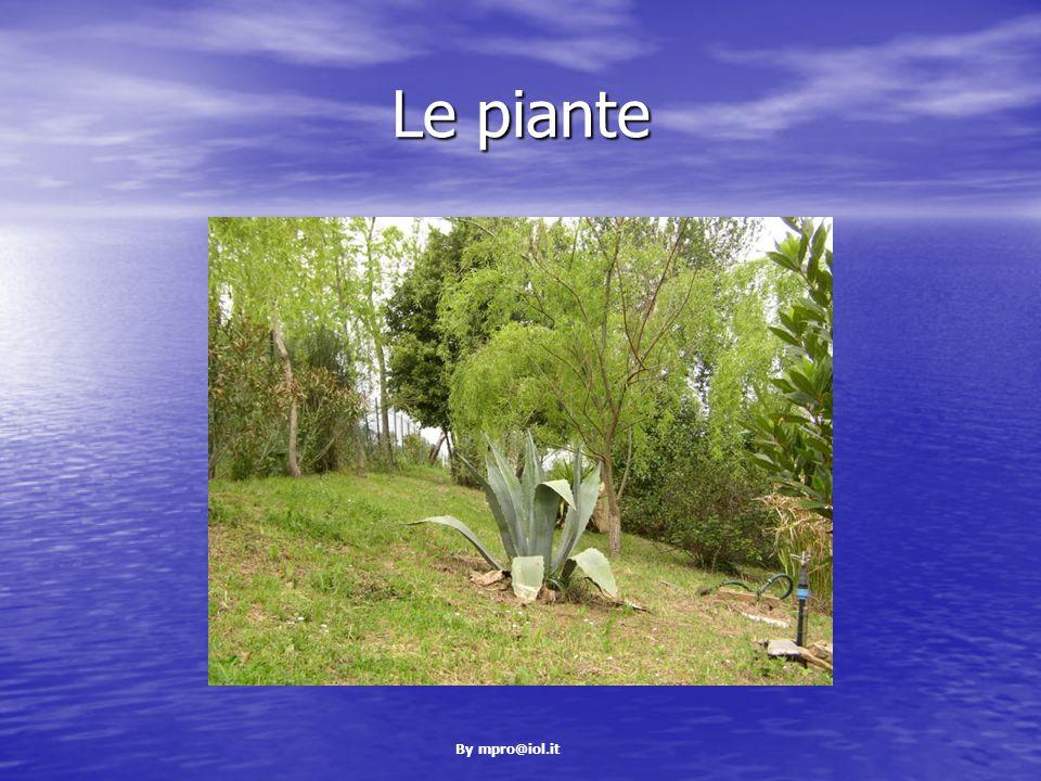 By mpro@iol.it Le piante
