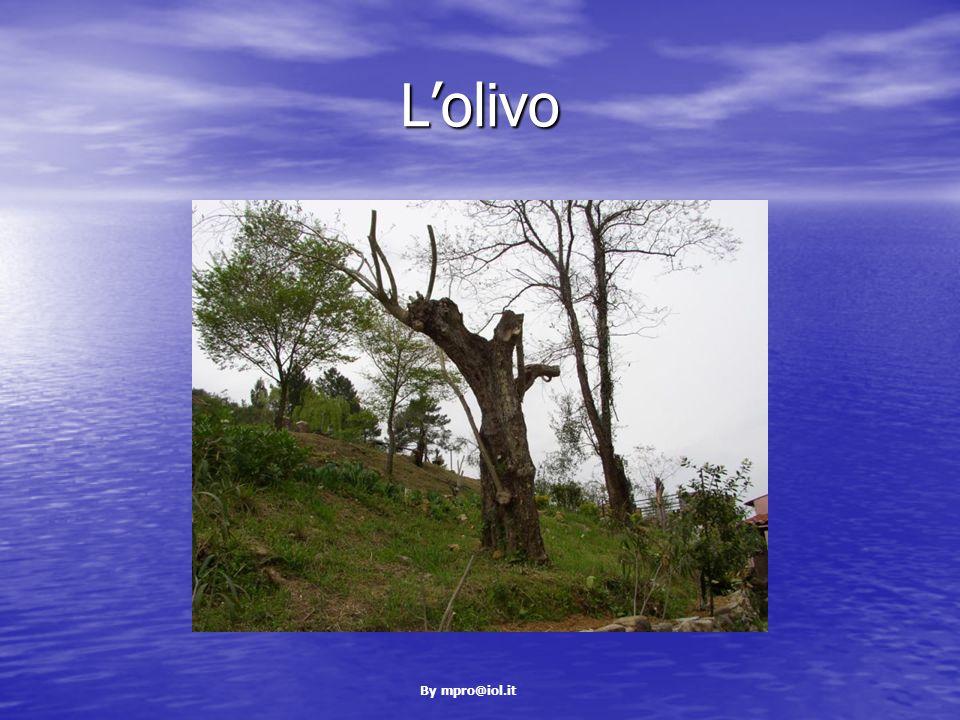 By mpro@iol.it L'olivo
