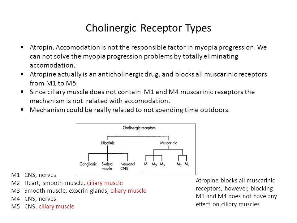 Cholinergic Receptor Types M1 CNS, nerves M2 Heart, smooth muscle, ciliary muscle M3 Smooth muscle, exocrin glands, ciliary muscle M4 CNS, nerves M5 CNS, ciliary muscle Atropine blocks all muscarinic receptors, however, blocking M1 and M4 does not have any effect on ciliary muscles  Atropin.