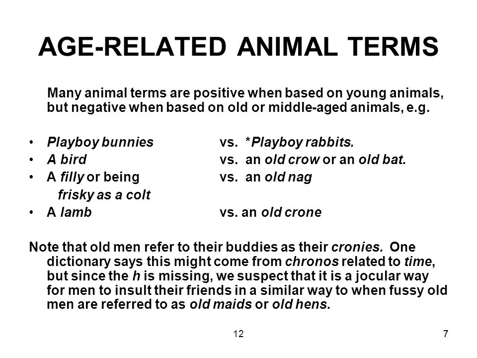 1277 AGE-RELATED ANIMAL TERMS Many animal terms are positive when based on young animals, but negative when based on old or middle-aged animals, e.g.