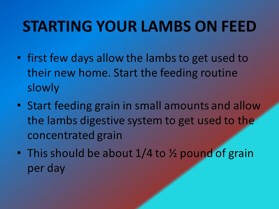 STARTING YOUR LAMBS ON FEED first few days allow the lambs to get used to their new home.